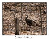 28April06 Spring Turkey - 10920