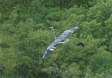 Strange Heron