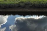 Grass Sky