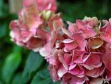 Yard Flowers 4