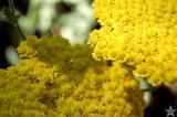 Yard Flowers 10