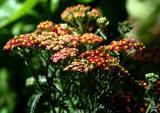 Yard Flowers 12