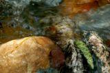 Meadowee River 6