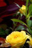 Vermont Flowers 7