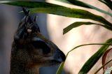 African Deer 1