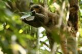 Lemurs in Ranomafana