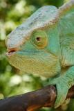 Reptiles in Ranomafana