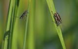 Insectes à identifier