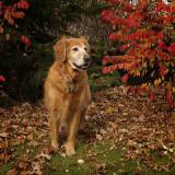 Dog Days of November