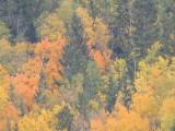 Cripple Creek Fall Foliage 2012