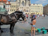 Watering the Horse, Prague