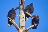Vultures Level 12 compression