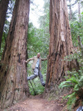 Muir Woods- climbing my way up