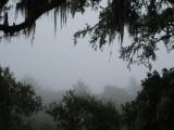 Mysterious fog in Muir Woods