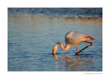 Oiseaux de Camargues - Birds of Camargue