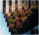 Autumn 2008 in New York City Gallery