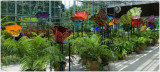 Chihuly  NY Botanical Gardens  8