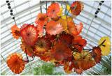 Chihuly  NY Botanical Gardens 15