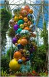 Chihuly  NY Botanical Gardens 14