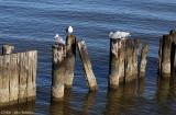 Wood and Gulls