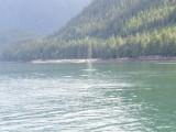 Humpback Whale Near Juneau, AK