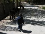 Donkeys seem a bit less intimidating.