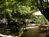 Lunch underneath apricot trees at the Penguin Restaurant .