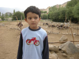 At the donkey orphanage in Leh.