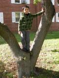 AT LAST.  A climbable tree!