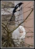Kattejakt (Hunting cat)