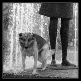 En hund etter vann 2