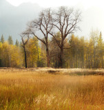 Sentinel meadow aglow