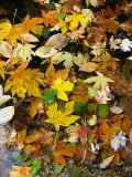 Leafy assortment