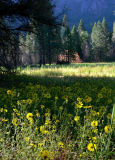 Morning meadow near El Capitan