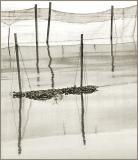 Nets  Sticks