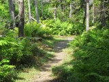 Nova Scotia coast and forest