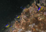 P6180088 Shrimpboat.jpg