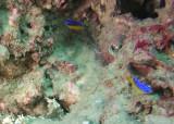 P6190118 Shrimpboat.jpg