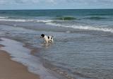 Ellen in the sea