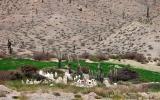 Quebrada del Toro - Cemetery
