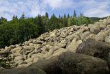 Stone river, Zlatni Mostove