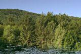 Boyana Lake reflection