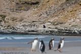 Penguins, penguins everywhere