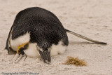 I loved this one because of the curled foot, the toenail marks in the sand, the closeup of feathers and the stretched out arm.