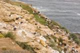 The albatross rookery
