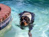 Izaak's adventures, poolside