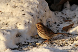 sparrowsunIMG_7210.jpg