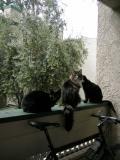 Too Many Cats!