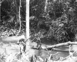 Jungle patrol on Cape Gloucester