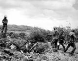 Flushing out the Japs on Okinawa